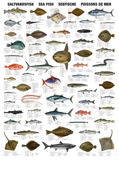 Plansje saltvannsfiske garnbua for Fish table game tips